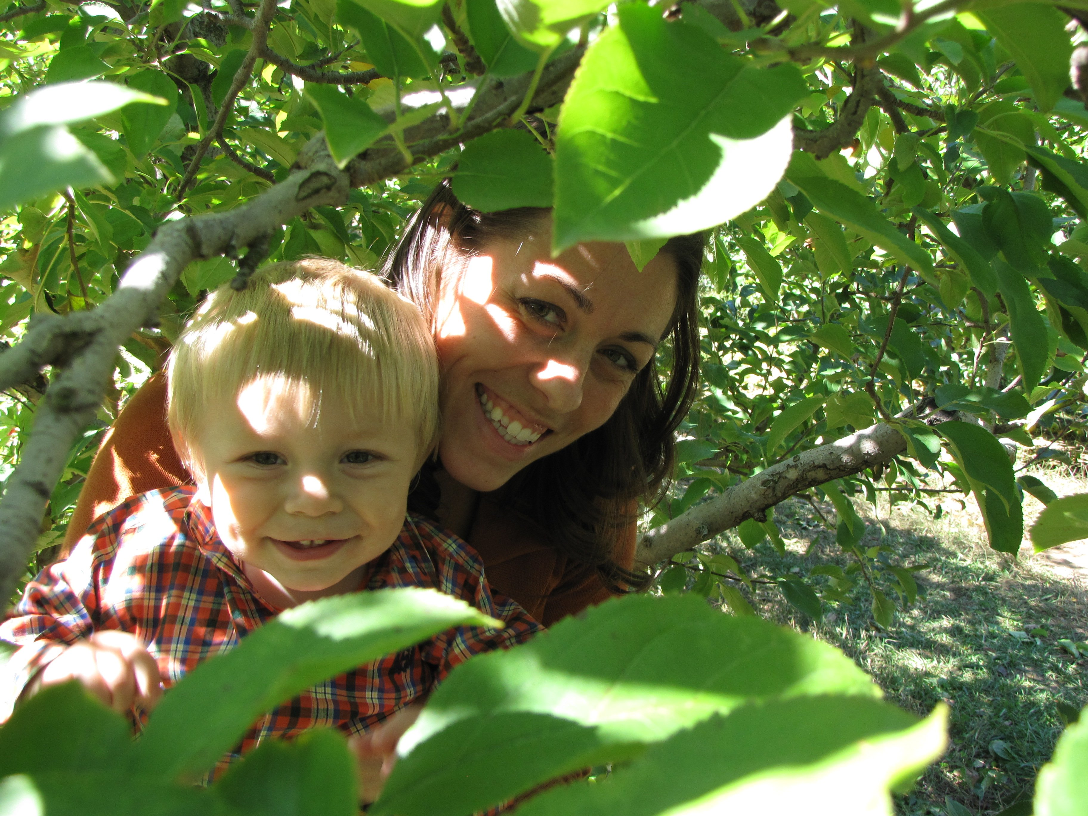 Apple Picking in the Appalachian Mountains