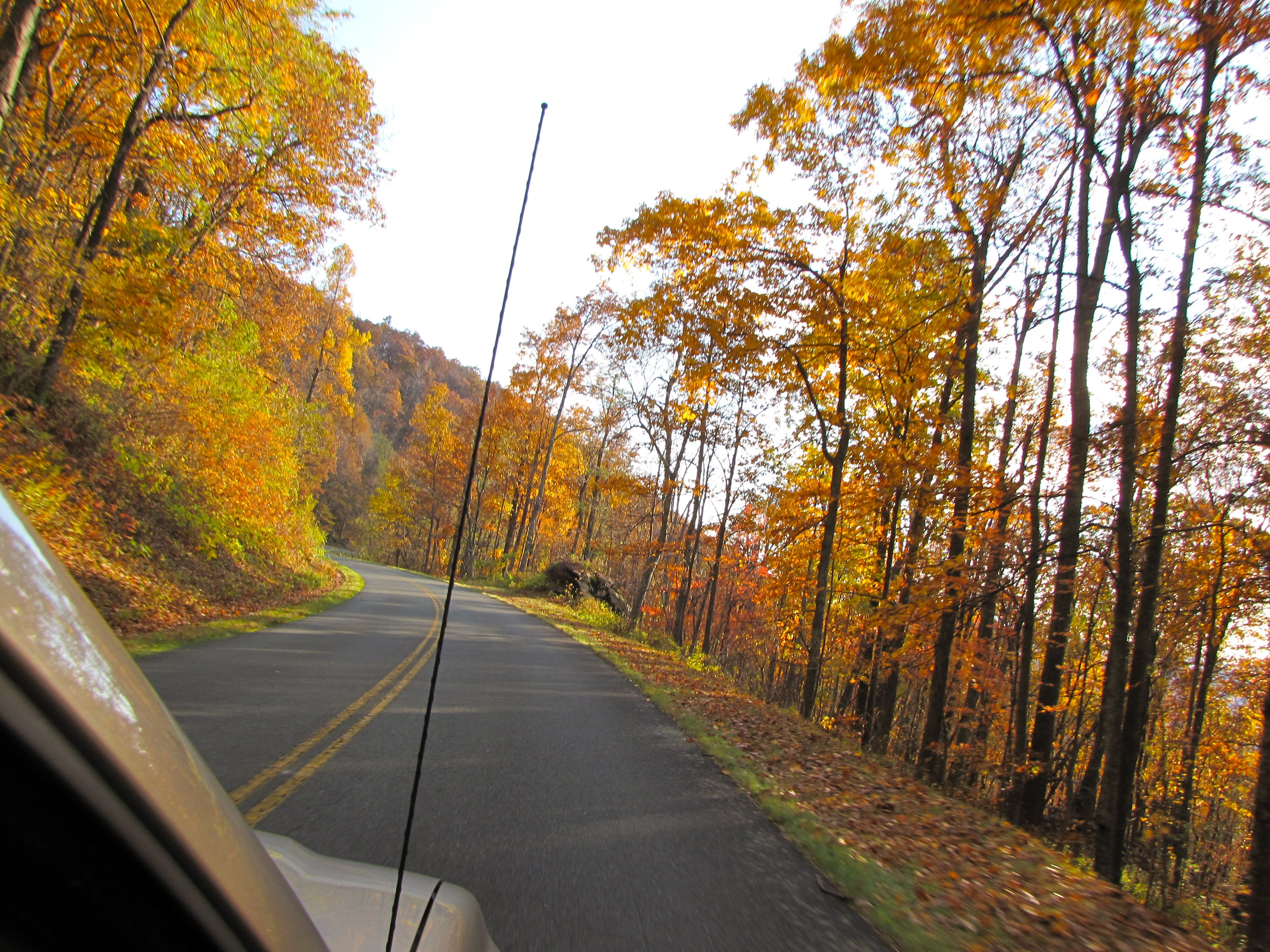 Trivia Question: What Is America's Favorite Drive?
