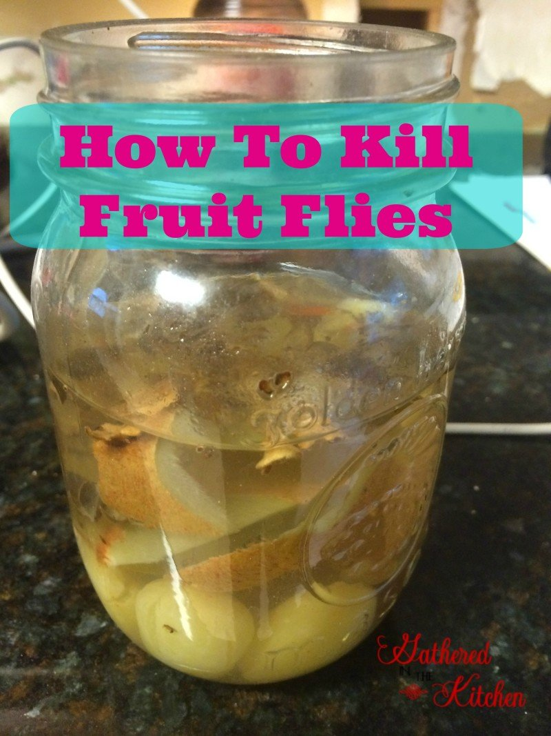 How To Kill Fruit Flies Gathered In The Kitchen