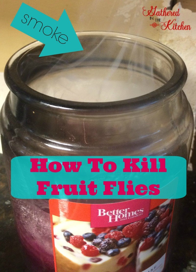 fruit diet healthy killing fruit flies