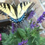 Grow Your Own Butterfly Kit: Fun for Kids!