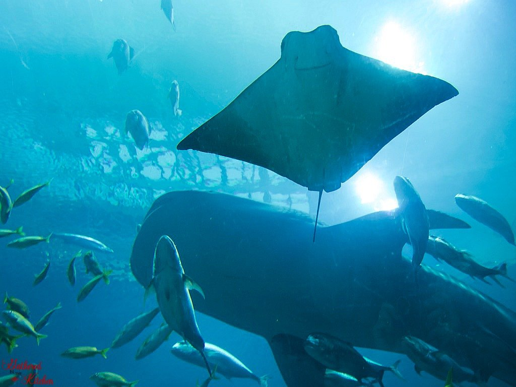 Georgia Aquarium, Atlanta, Georgia