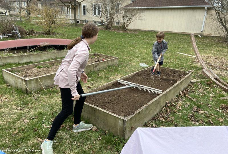 Planting a vegetable garden in raised garden bed
