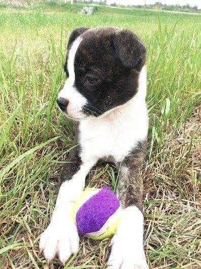 Meet Julia, our rescue dog