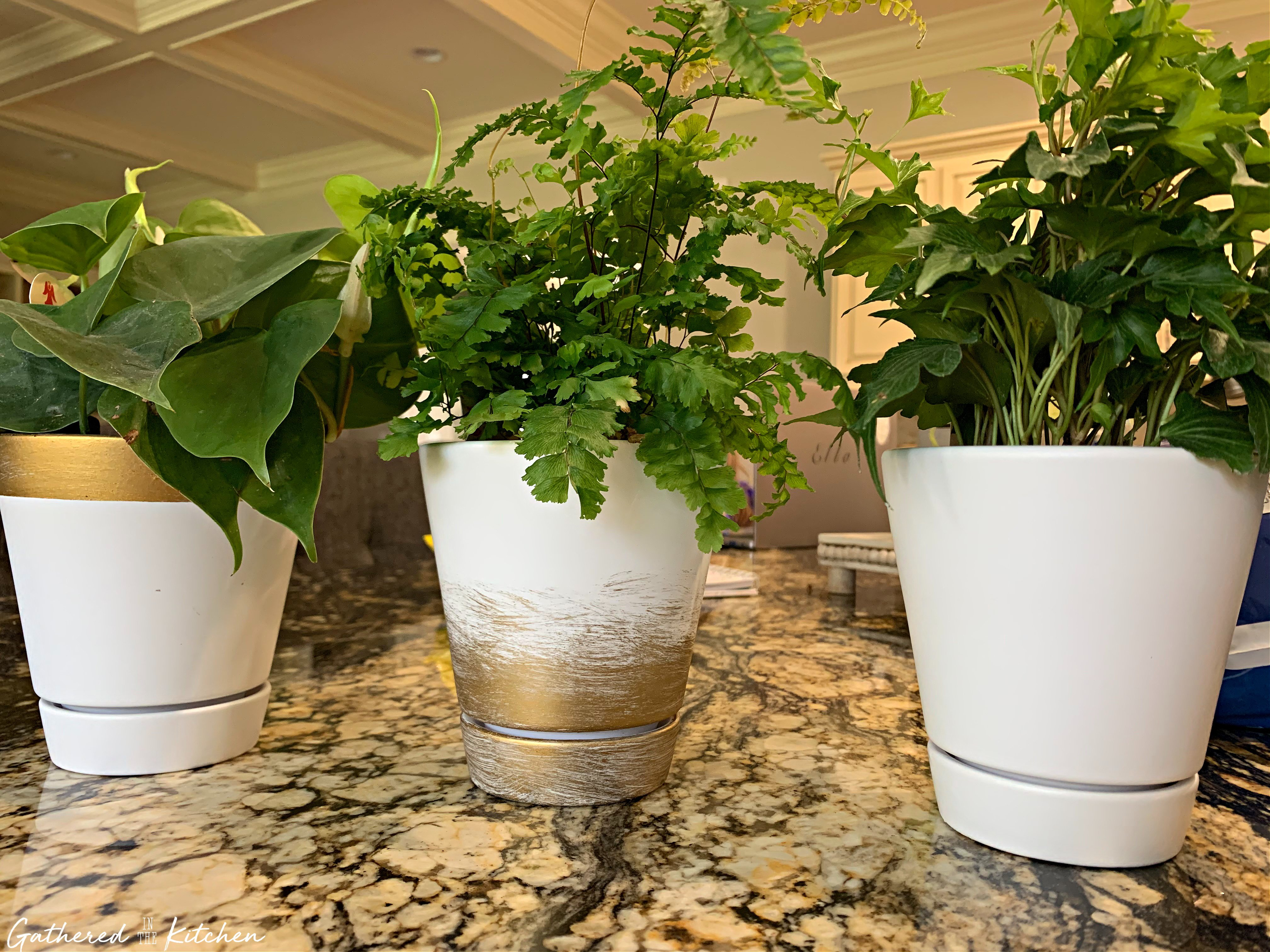 white flower pots with gold leafing and green houseplants