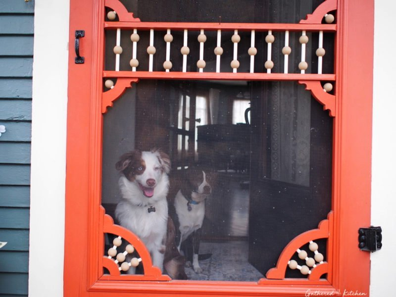 dogs by victorian porch door