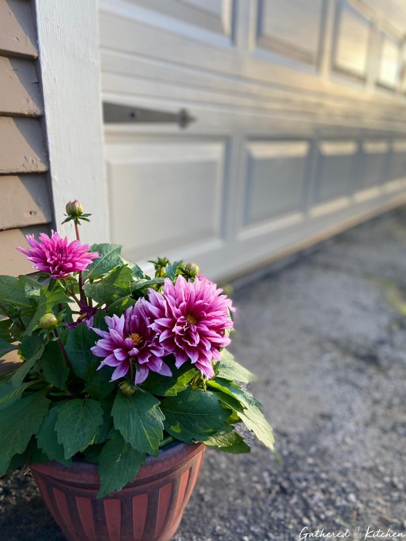 flowers by garage door